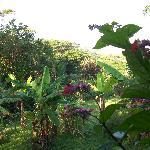 Abundant plantlife on the property