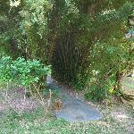 Thick abundance of plantlife on property