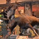 moose in bass pro