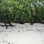 West end of Flamingo Beach