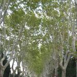 Tree lines near the Mas