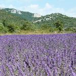 Au coeur de l'Ardèche et des champs de lavande !