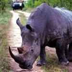 Rhino at last