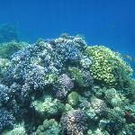 Beautiful Corals
