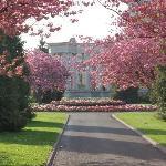 ウェールズ国立戦争メモリアル碑と八重桜
