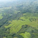 Green flatlands