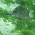stingray in Three Sisters