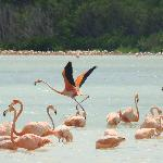 Flamingo Tours Foto