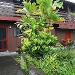 Garden Lanai