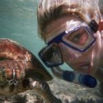 Swimming with turtles at green island! This one let me pat it. Most amazing place ever - Emily J