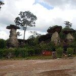 Funghi di roccia