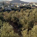 Vue de l'oliveraie depuis l'hôtel