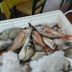 Fresh-fresh-fish