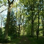 Des bois magnifiques, ainsi qu'un parc bien entretenu entourent le cimetière