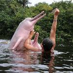 Fauna acuatica de la amazonia boliviana