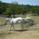 El caballo Artax