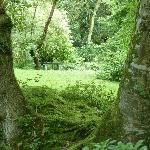 part of the woodland walk