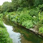 The leat, and its flower borders