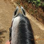 horse called - destiny's child