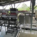 Coffee Cherries Weighing Station