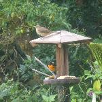 An oriole and friend at the bird feeder during breakfast