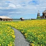 Perched on a hill of dandelions the magestic church overlooks Lake Onega