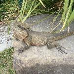 some sort of lizard