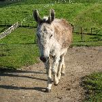 one of the 4 donkeys