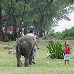 Lucky the baby elephant