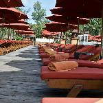 Sun lounges for the main pool