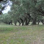 Foto di Le Terme di Velia