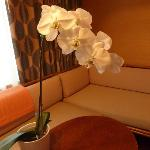 Orchids and Florence Broadhurst fabric curtains
