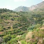 Beautiful hillside view from Il Gato