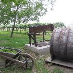 Balsamico Farm
