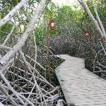 mangroves by the beach