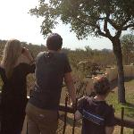 Watching the elephant right outside of the wall