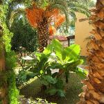 Photo de Talea Hotel Beach