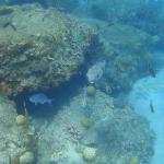 unterwasserwelt vor dem hotelstrand3