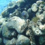 unterwasserwelt vor dem hotelstrand