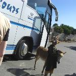 Photo with boy and donkey is 1 euro
