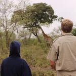 walk the giraffes