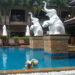 Nipa pool