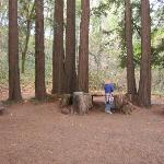 The circle of redwoods at Reverie - so cool!