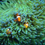 Bunaken Twofish dive