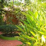 Fern Gardenia