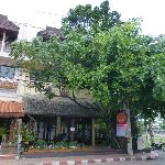 the banyan tree at the front of the building