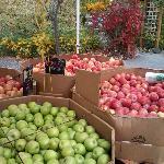 Olympia farmer's market apples in October, 2012