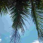 nice palms