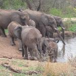 See the traffic at Jaci's watering hole!