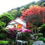Beautiful Maple Tree~